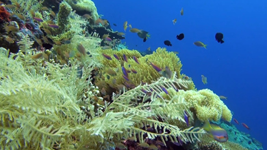 Special edition - Part 2 of 5 Biodiversity of the coral triangle